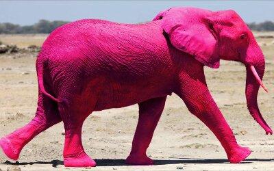 Não imagine um elefante cor de rosa